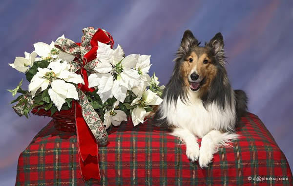 Be Kind To Dogs - Dog Training Call 480-272-8816 for Dog Training in Chandler, AZ, Dog Training in Gilbert, AZ, Dog Training in Tempe, AZ, Dog Training in Mesa, AZ, Dog Training in Ahwatukee, AZ and surrounding areas. Be Kind To Dogs Kathrine Breeden