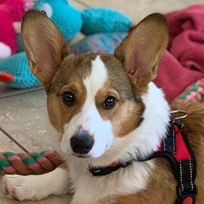chandler dog training